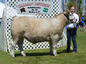 Amanda McCullough steer (Carman)
