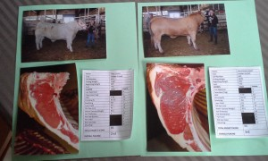 Lusson 4-H Carcass